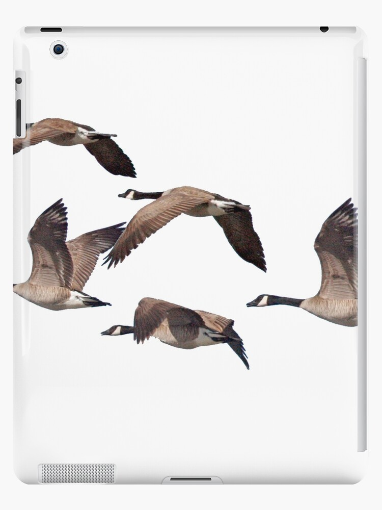 Canadiana geese 6 by saltypro