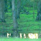 Small Rainfall Pond by photoartful