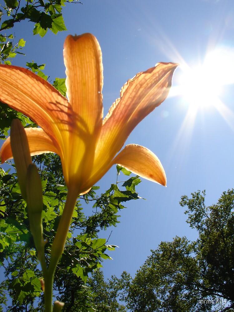 orange flower 3 by mrmc714