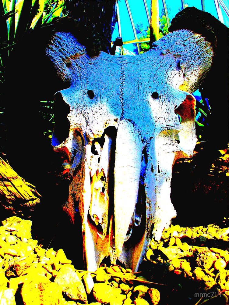 cow skull by mrmc714