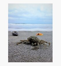 Up close and crabby Photographic Print