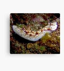 Nudibranch on Steroids Canvas Print