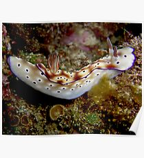 Nudibranch on Steroids Poster