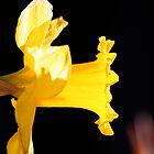 Yellow flower glowing in the dark by Robin Fortin IPA