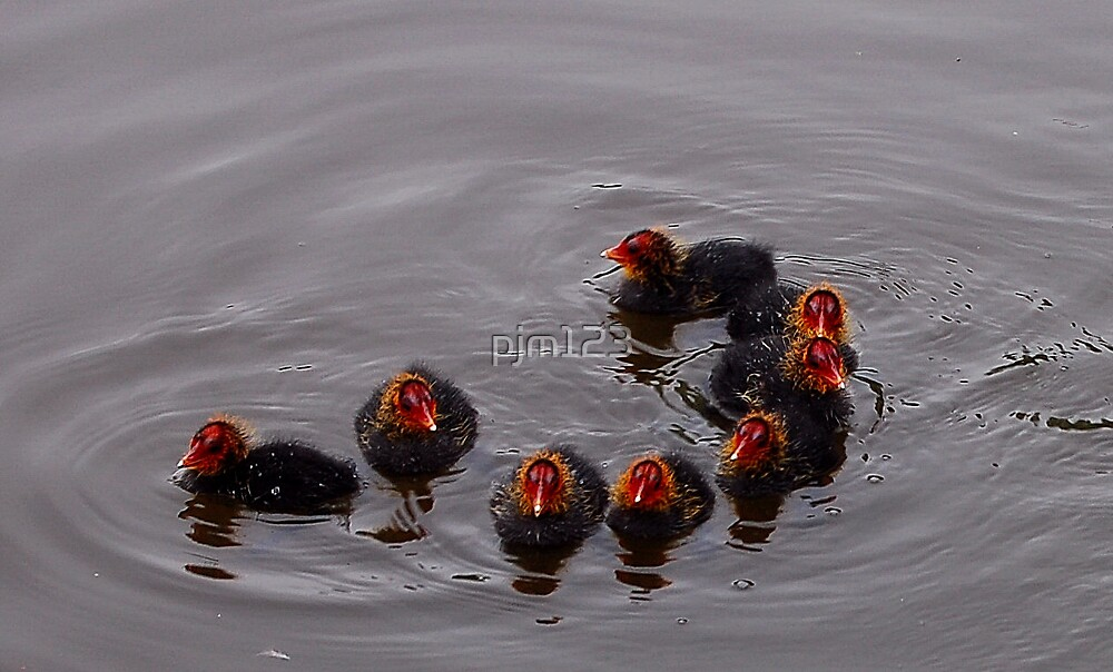 Break In Formation by pjm123