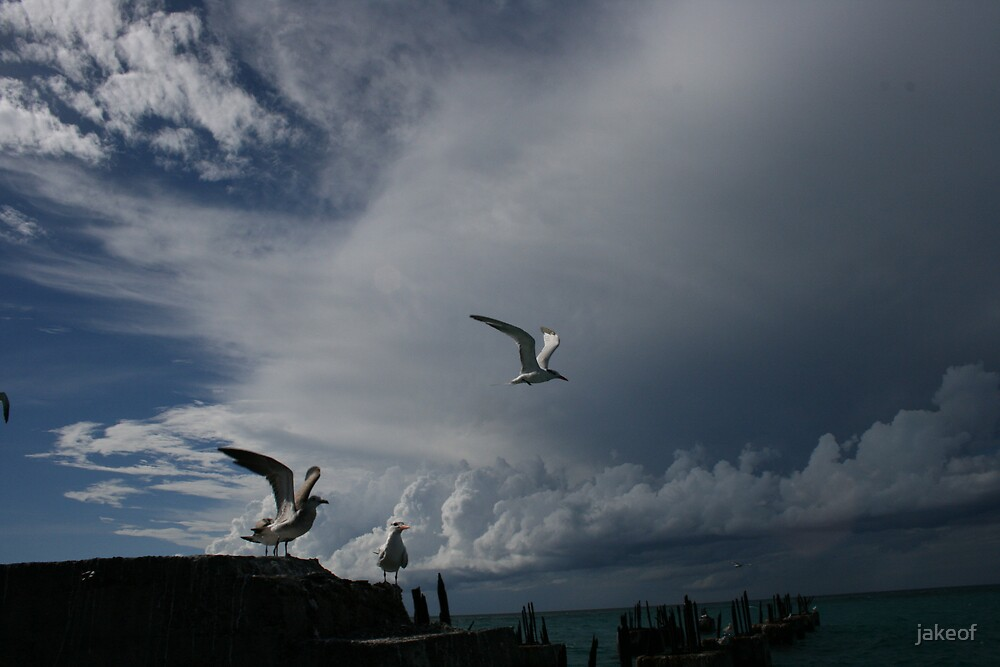 A Tern Of The Horizon by jakeof