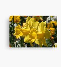 Smiling Daffodils Canvas Print