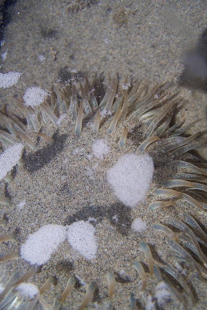 Sea Anemone in Sand by montana16