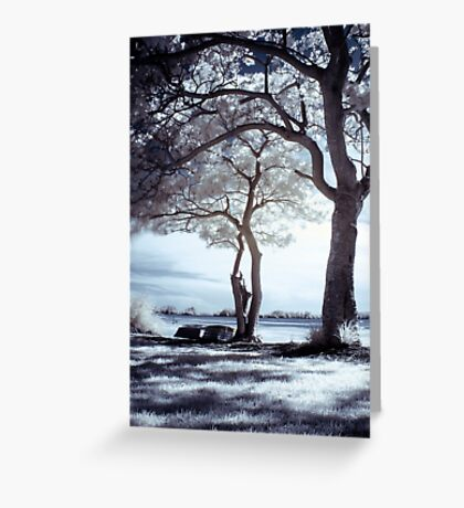 Shadows & Light Greeting Card