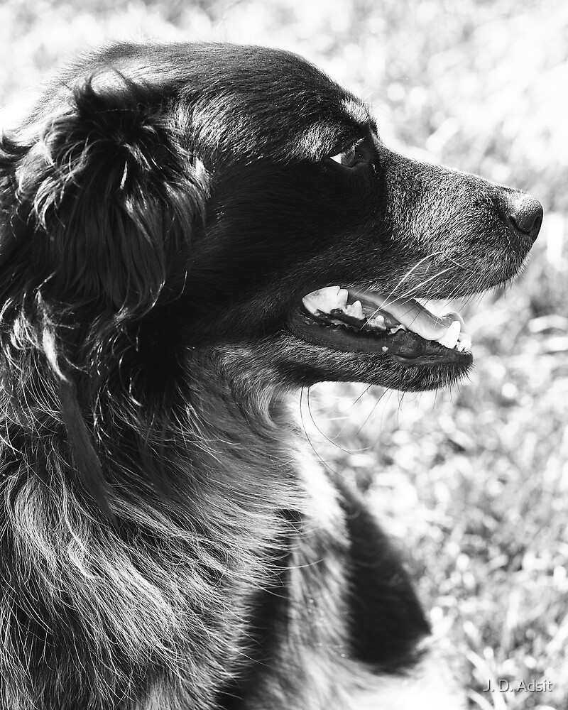 Canine Character by J. D. Adsit