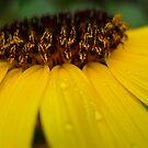 Bee's Eye View by Michael Reimann