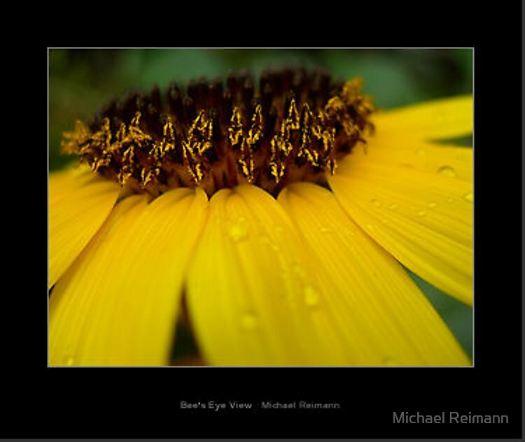 Mounted medium Bee's Eye View by Michael Reimann