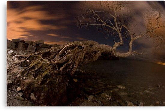 Dark Tree by Will Pursell