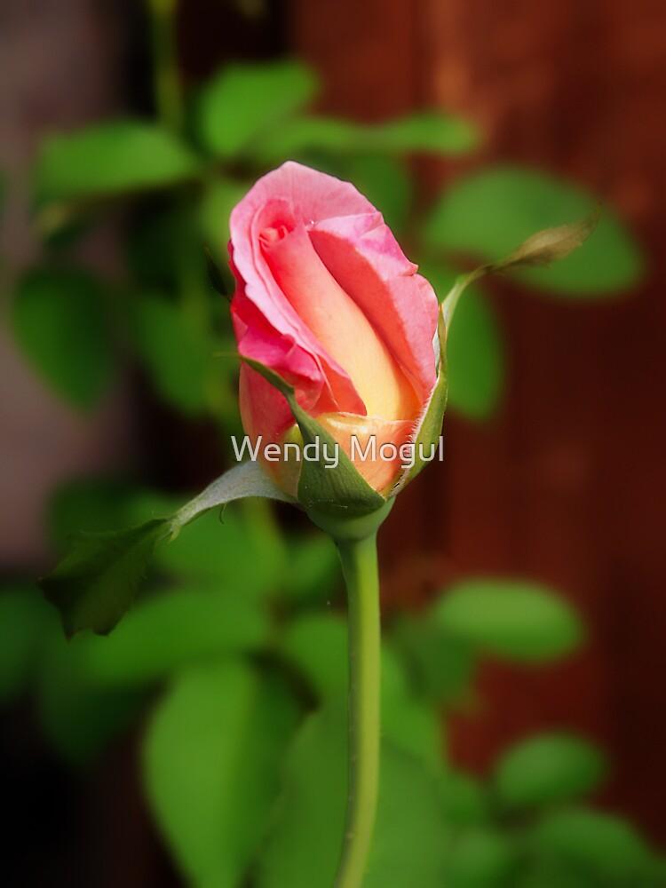 Rosebud by Wendy Mogul