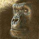 Gorilla in color pencil by Marlene Piccolin