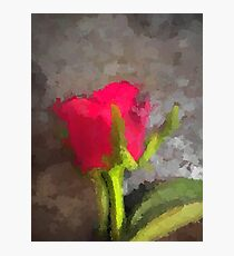 A Pink Rose Defies the Grey Photographic Print
