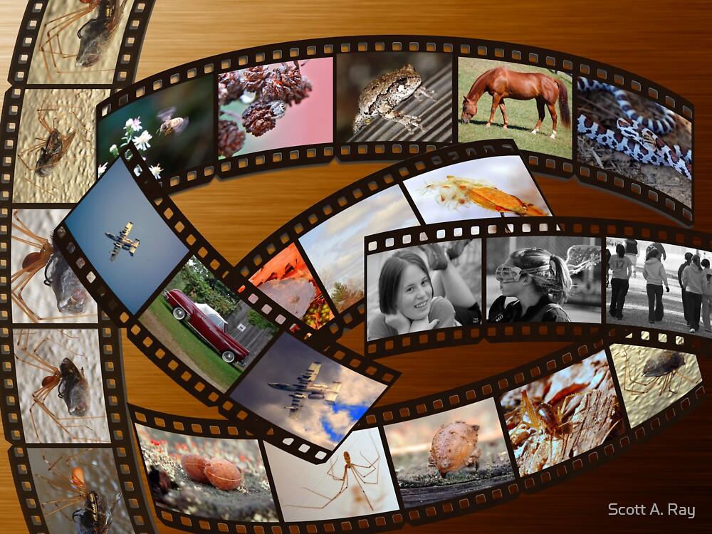 Film by Scott A. Ray