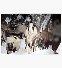 Reindeer-wildlife Poster