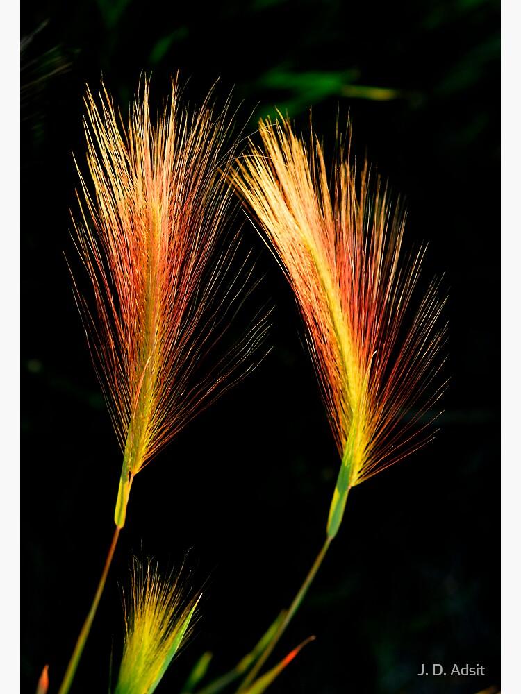 Wetland Paintbrush by adsitprojectpro