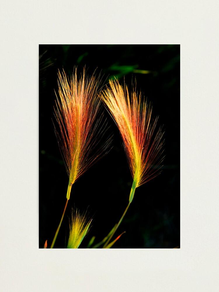 Alternate view of Wetland Paintbrush Photographic Print