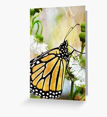 Butterfly sipping Nectar Greeting Card