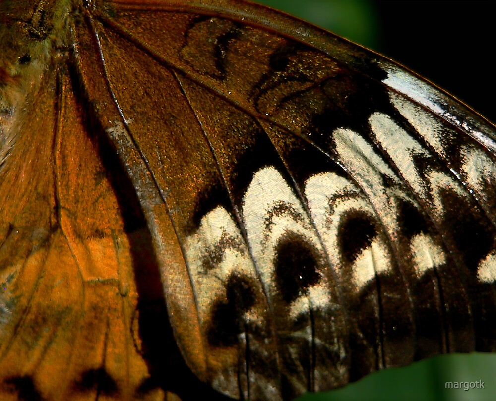 Wing of a Butterfly by margotk