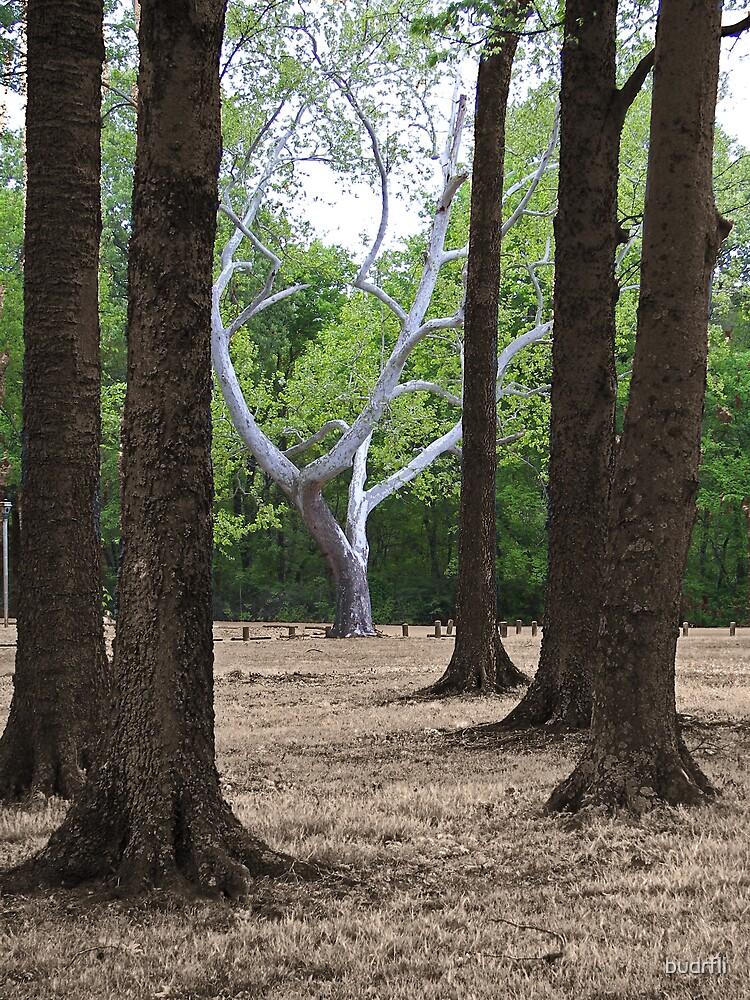 the tree by budrfli