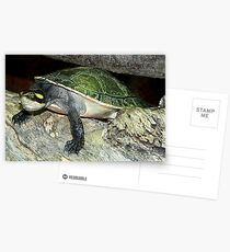Tortoise Postcards