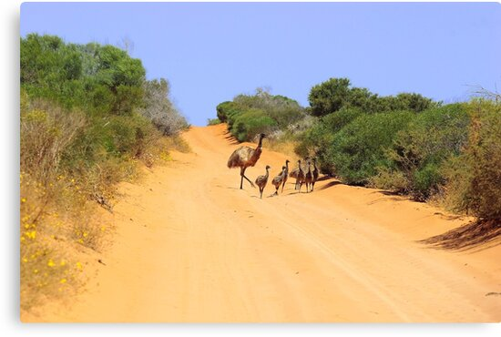 Emus on the track by EOS20