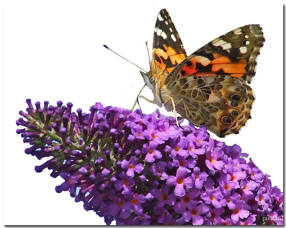 Hi Key Butterfly by punch