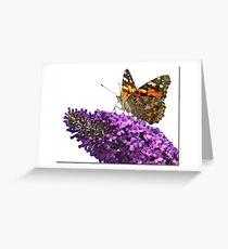 Hi Key Butterfly Greeting Card