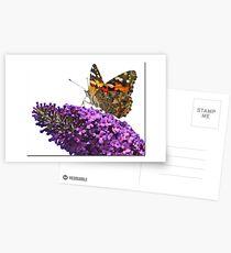 Hi Key Butterfly Postcards