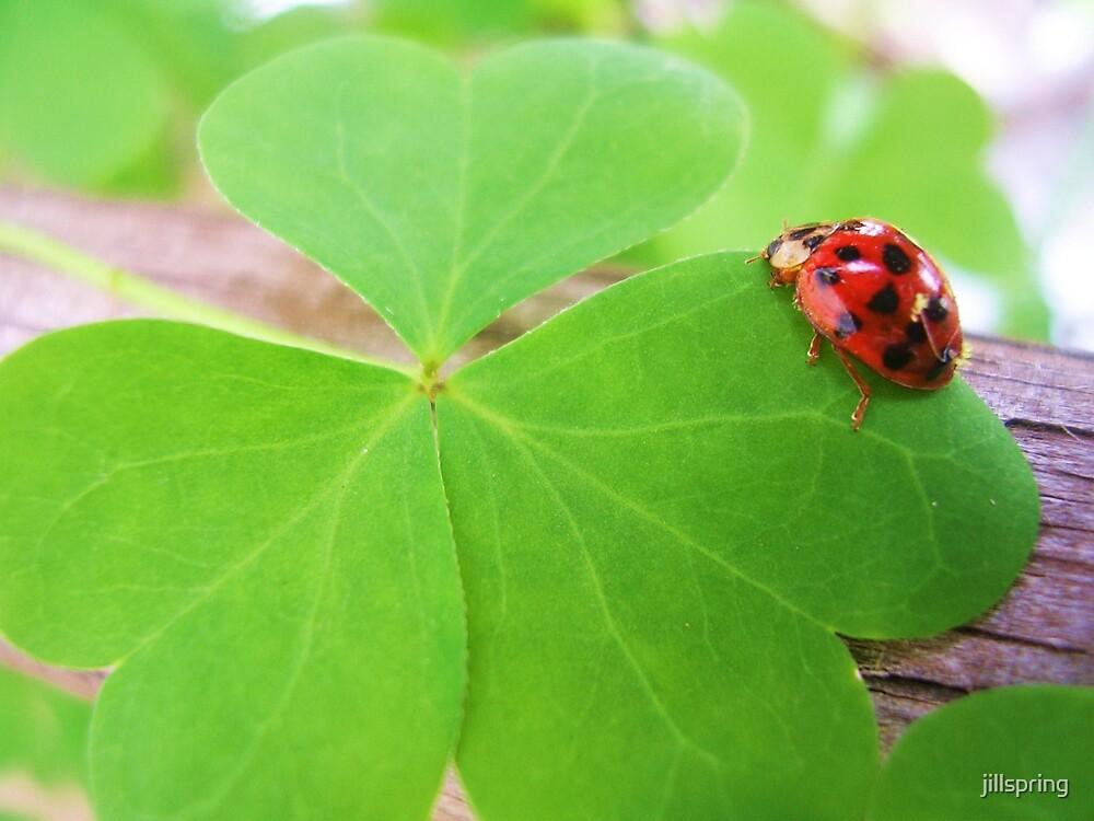 Luck Be a Lady by jillspring