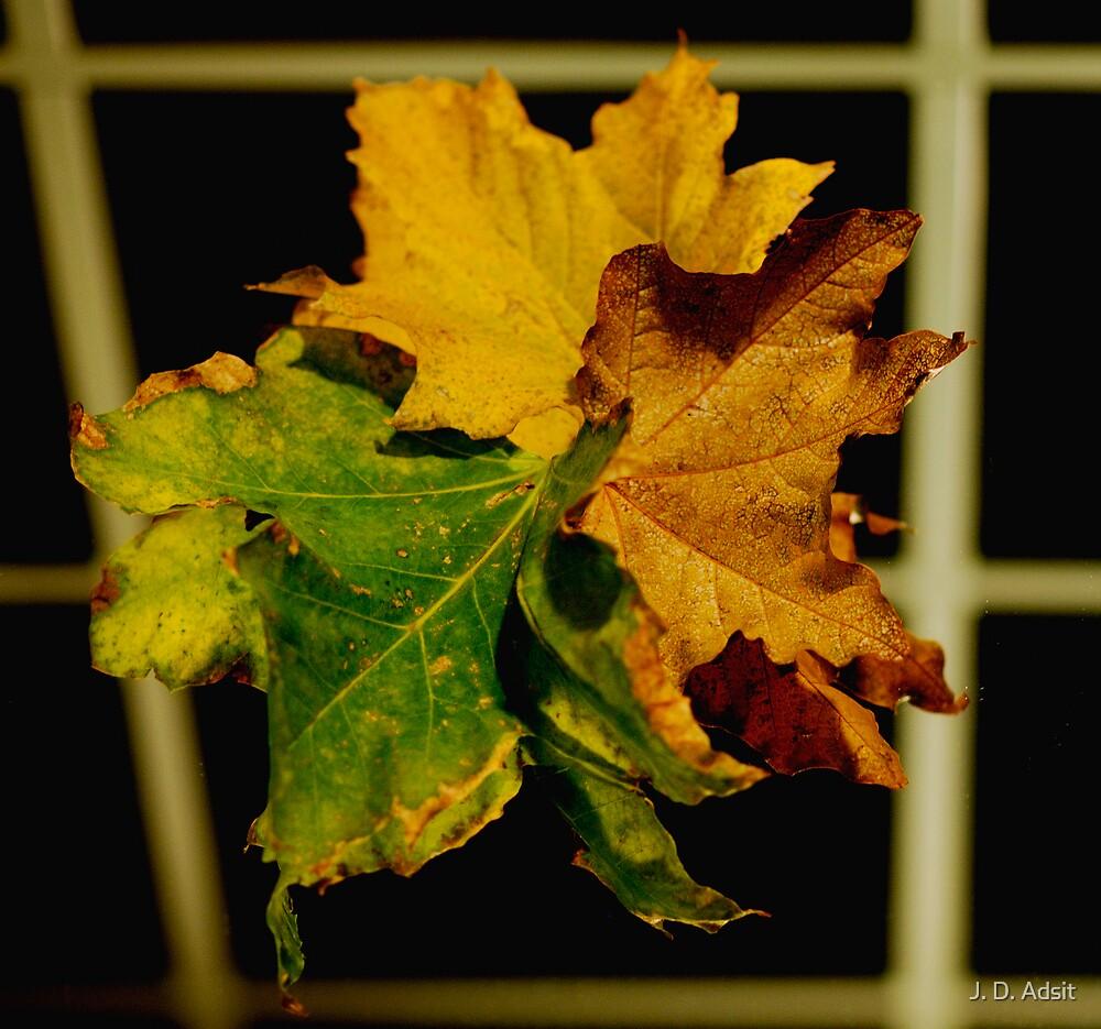 Autumn Texture Reflected by J. D. Adsit