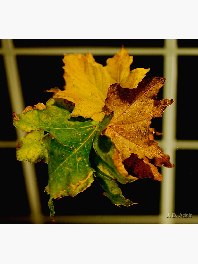 Autumn Texture Reflected by adsitprojectpro