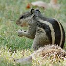 Squirrel 1 by Dr. Sandeep Jain
