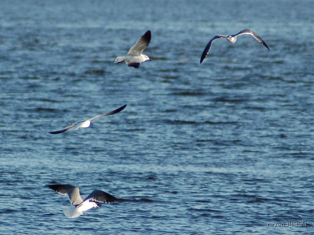 Sea Gulls St Lucie River by raven34994