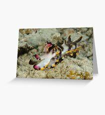 Flamboyant cuttlefish - Metasepia pfefferi Greeting Card