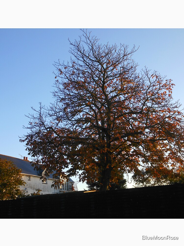 A Tree in Autumn at Sunrise by BlueMoonRose