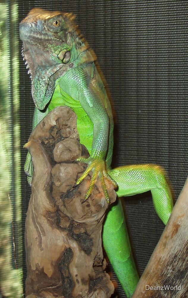 Awsome Iguana by Dean Warwick