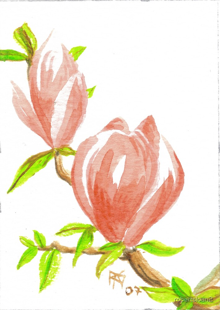ACEO Two Magnolia Blossoms by robertsloan2