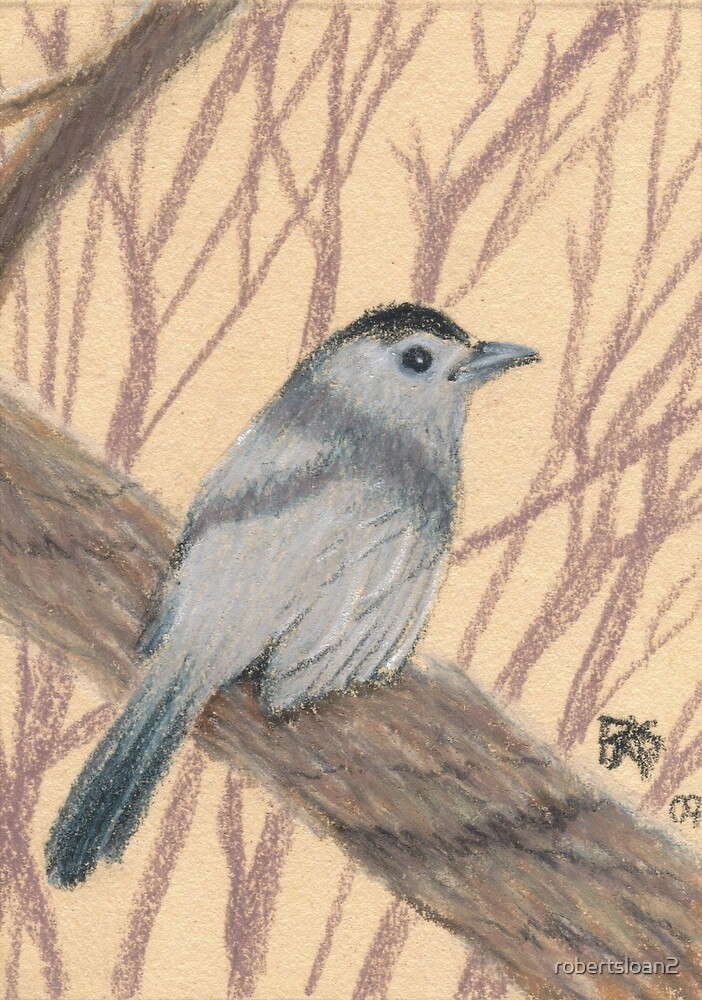 ACEO Catbird by robertsloan2