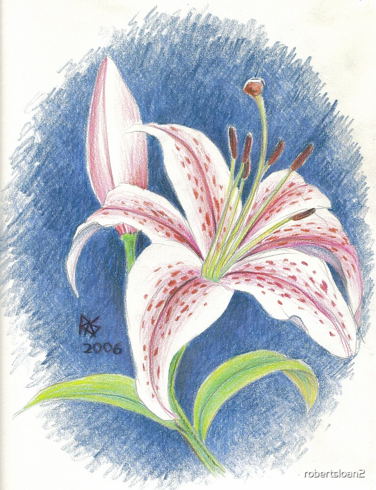 Asiatic Lily by robertsloan2