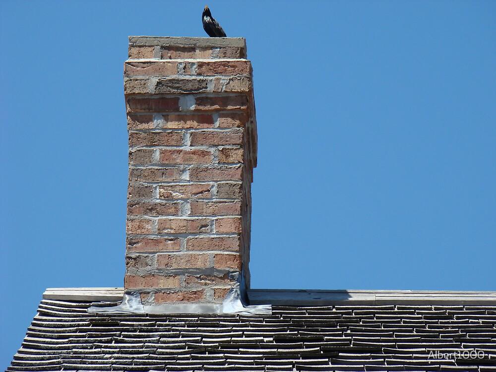 Bird on chimney by Albert1000