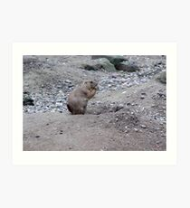 Prairie Dogs X Art Print
