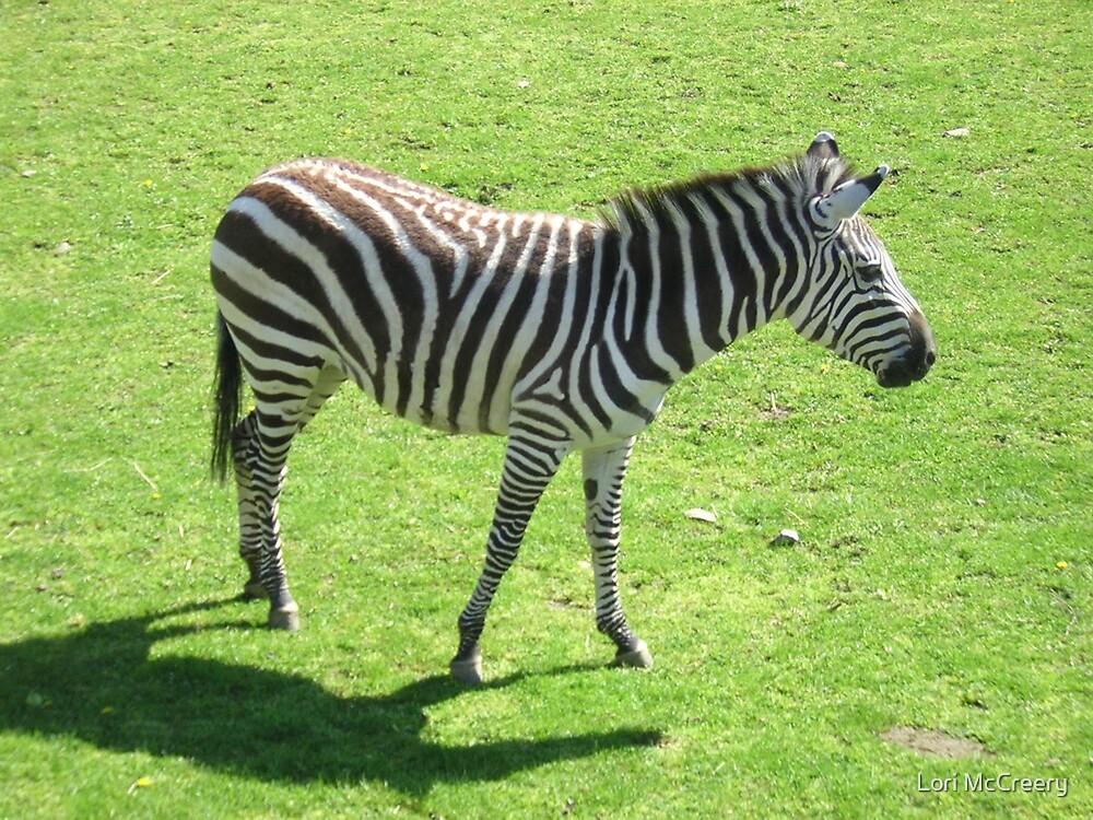 Zebra at the Zoo by Lori McCreery