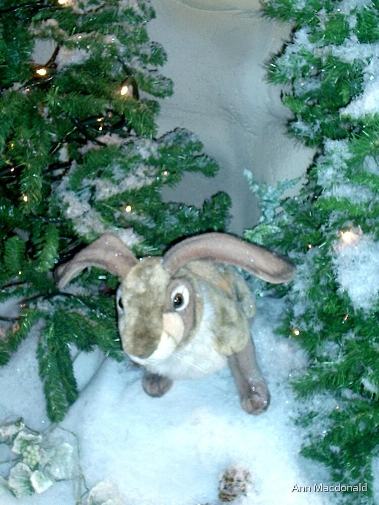 snowy bunny by Ann Macdonald