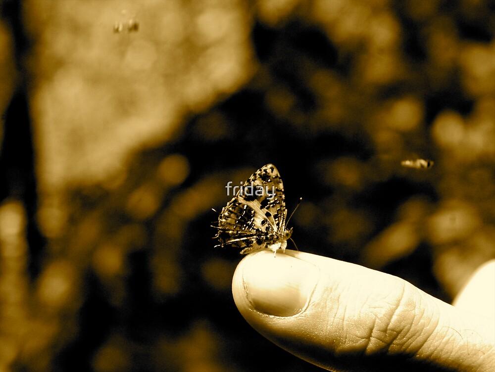 butterfly by Amagoia  Akarregi