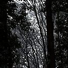 snowy Oregon forest 4 by Dawna Morton