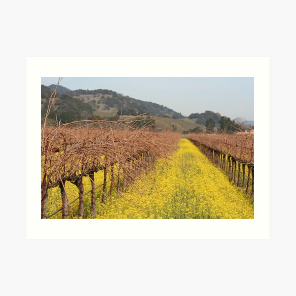 Mustard in the Vineyards Art Print